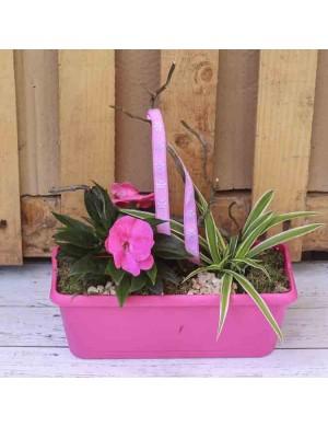 Jardinière de 4 plantes en vannerie avec grenouille bois