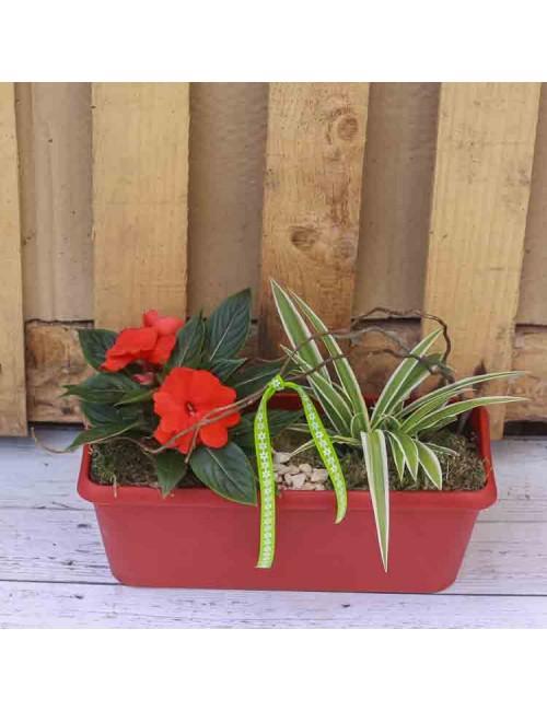 Jardinière 40cm rose 2 plantes +decor