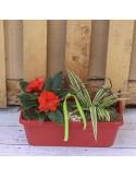 Jardinière 40cm rouge 2 plantes +decor