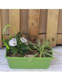 Jardinière 40cm verte 2 plantes +decor