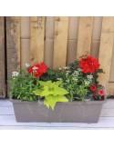 Jardinière 50cm 7plantes variation rouge