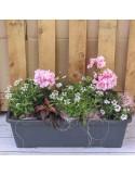 Jardinière 50cm 7 plantes variation rose
