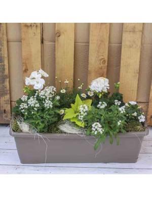 Jardinière 50cm 7 plantes variation blanc