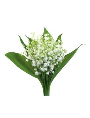 Bouquet de Muguet - 16 brins