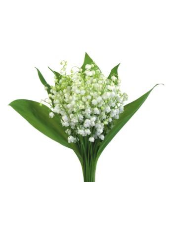 Bouquet de Muguets