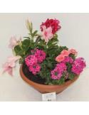 Composition cimetière 4 plantes ton rose/rouge